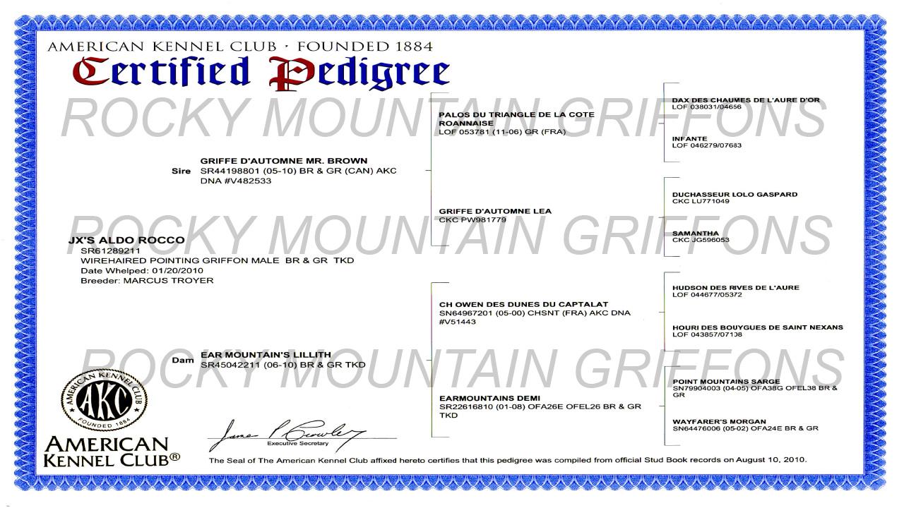 Mocha von Hartzheim AKC Certified 4 Generation Wirehaired Pointing Griffon Pedigree