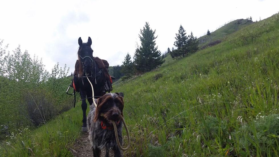 Griffon leading a horse
