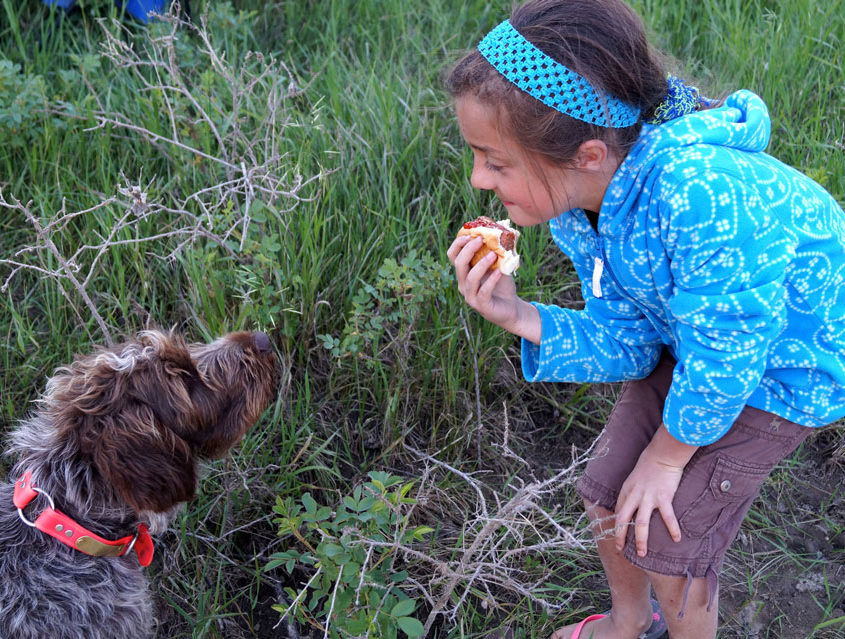 Wirehaired Pointing Griffon and Child